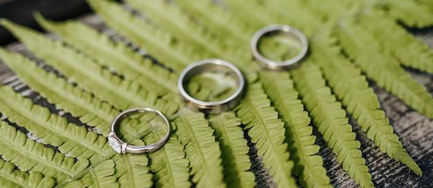 Duas alianças de casamento e um anel de noivado repousam sobre uma planta de samambaia em uma mesa de madeira
