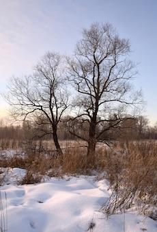 Duas árvores nuas em um campo de inverno