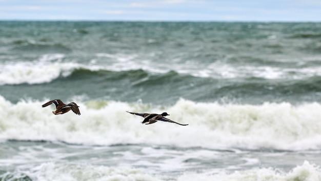 Duas aves aquáticas voando sobre a água do mar