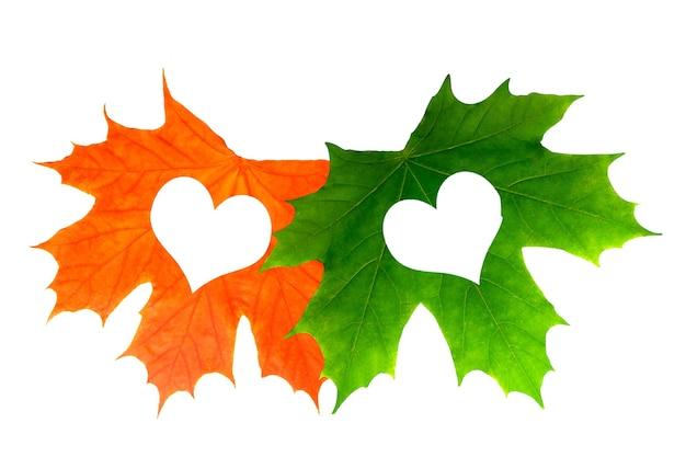 Duas belas folhas de bordo com corações. isolado em fundo branco