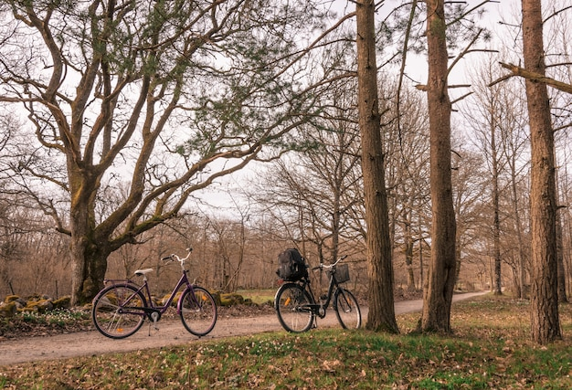 Duas bicicletas estacionadas em uma pequena estrada rural na floresta, parque nacional jomfruland, kragero, noruega