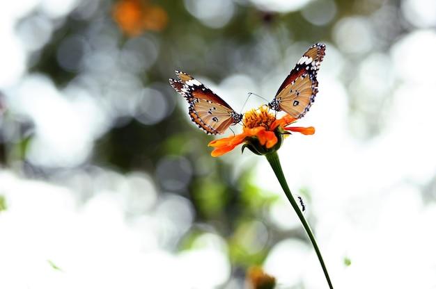 Duas borboletas e uma formiga cheiram a flor no jardim
