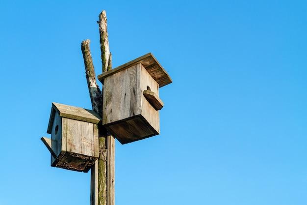 Duas caixas de ninho de madeira caseiros contra o fundo do céu azul