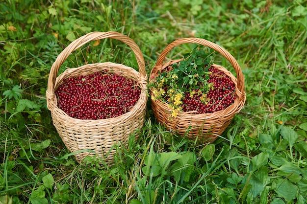 Duas cestas de vime cheias de bagas de groselha e um ramo de flores de erva-de-são-joão na grama