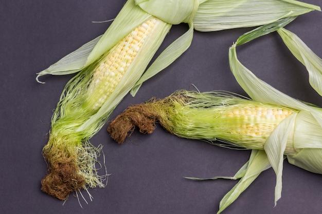 Duas espigas de milho com folhas e fios sedosos. fundo preto. postura plana