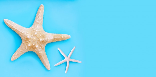 Duas estrelas do mar