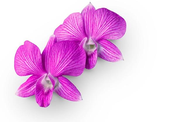 Duas flores da orquídea colocadas em um fundo branco com trajeto de grampeamento e saem do espaço.