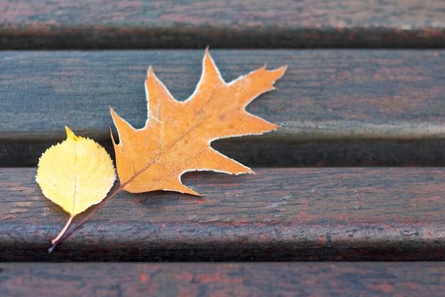 Duas folhas secas em um banco de um parque da cidade