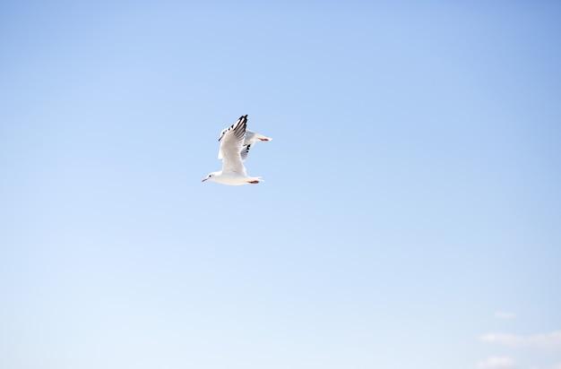 Duas gaivotas brancas voando contra um céu azul claro