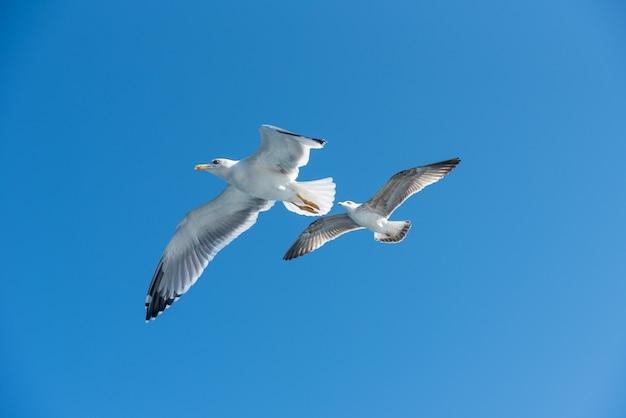 Duas gaivotas no céu azul.