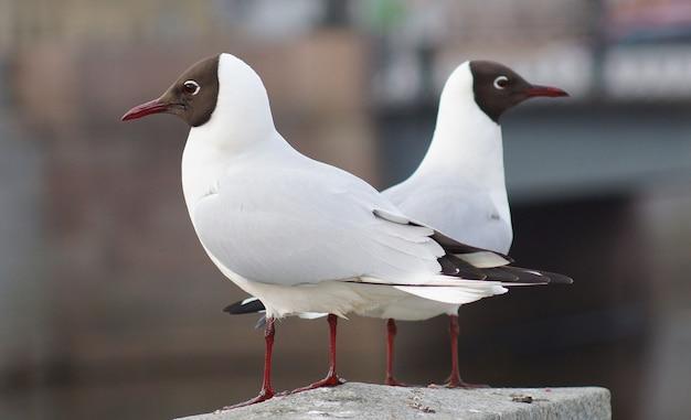 Duas gaivotas sentadas em uma cerca de granito olhando em direções diferentes