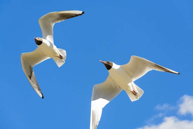 Duas gaivotas voando no céu azul sobre o mar