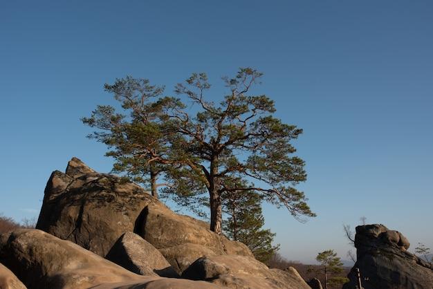 Duas grandes árvores que crescem no topo de uma falésia