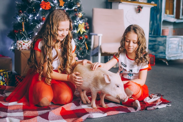 Duas irmãzinhas estão brincando com um mini porco perto de uma árvore de natal com presentes.