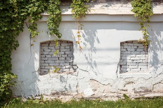 Duas janelas falsas na antiga parede branca rachada com partenocissus.