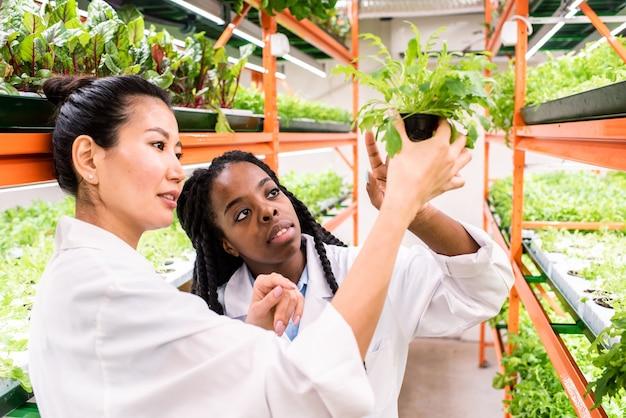 Duas jovens biólogas interculturais discutindo uma planta verde em um vaso de flores enquanto trabalham em uma estufa