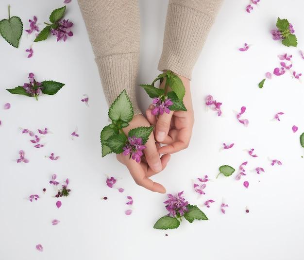 Duas mãos de uma jovem com pele lisa e um buquê de flor rosa