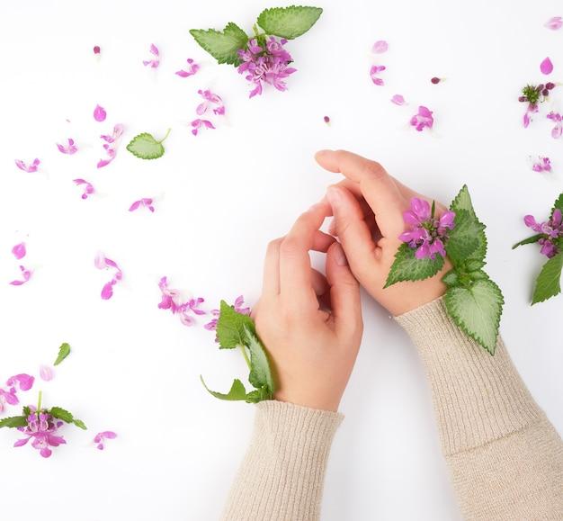 Duas mãos de uma jovem garota com pele lisa e um buquê de flores cor de rosa