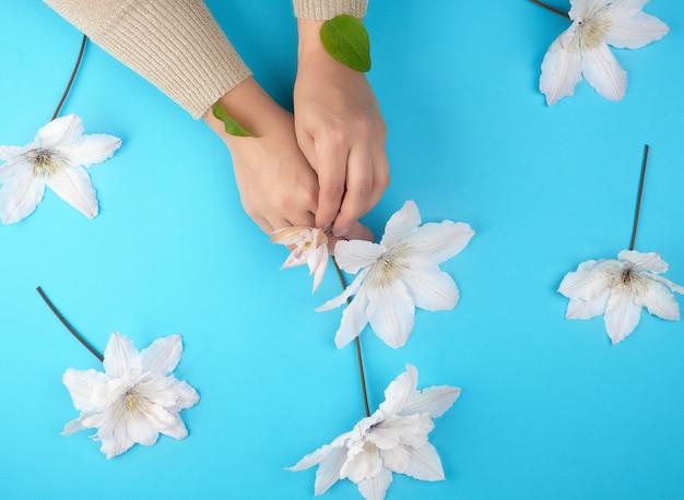 Duas mãos femininas segurando botões de clematis branco desabrocham