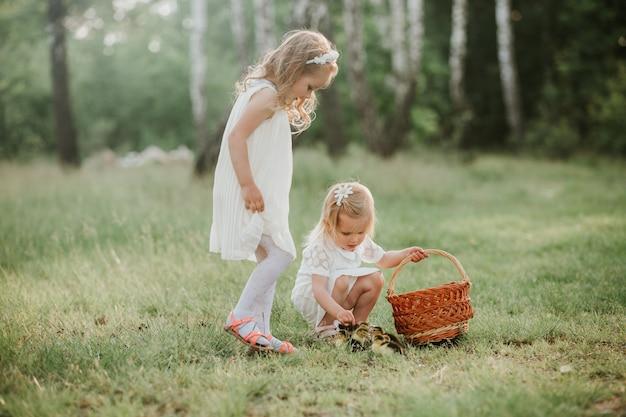 Duas meninas brincando com patos no parque. duas meninas, em, pôr do sol, com, encantador, patinhos