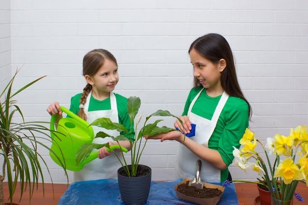 Duas meninas irmãs com cabelos claros e escuros, vestidas com camisetas verdes e aventais replantando flores
