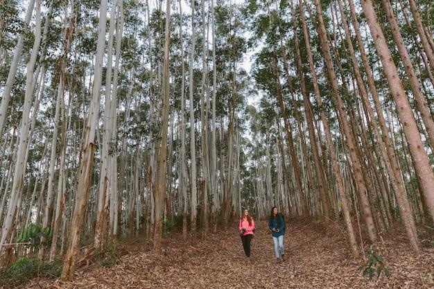 Duas mulheres, hiking, em, floresta