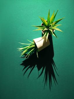 Duas pequenas plantas suculentas em vasos, projetando longas sombras sobre fundo de papel em biscaia verde