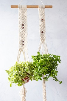 Duas plantas penduradas sobre linhas de tecido bordado
