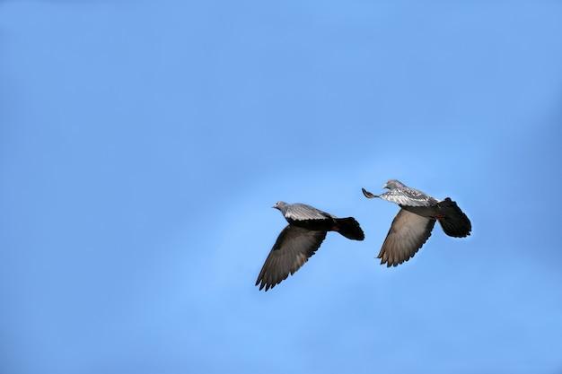 Duas pombas no céu