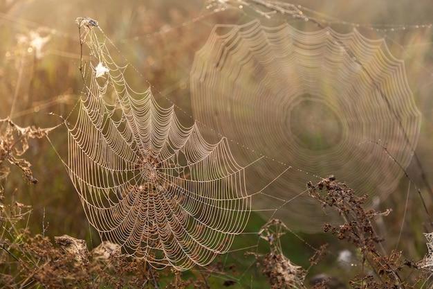 Duas teias de aranha. duas grandes teias de aranha pela manhã no campo na grama seca, borrão e teias legíveis.