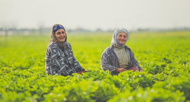 Duas trabalhadoras trabalhando e sorrindo em uma plantação de chá.