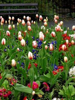 Dublin - st. stephen's green - canteiro de flores
