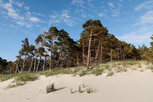 Dunas de areia com pinheiros e nuvens