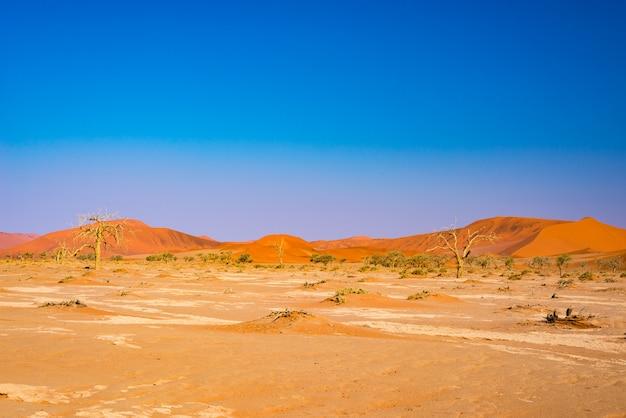 Dunas de areia no deserto do namibe ao amanhecer, roadtrip no maravilhoso namib naukluft national park.
