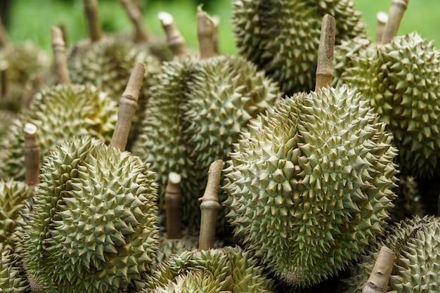 Durian coloca que os jardineiros cortaram da árvore antes de serem ordenados e depois vendidos.