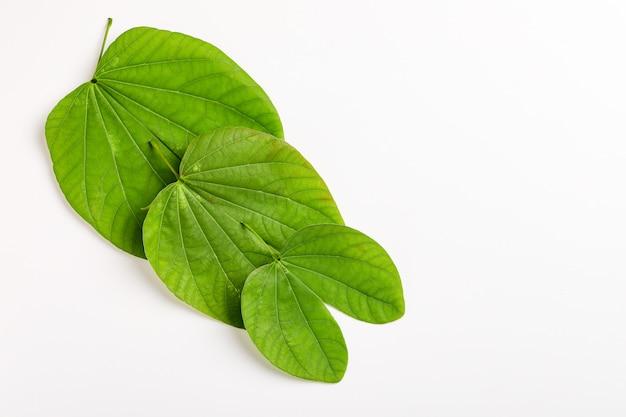 Dussehra feliz com folha verde