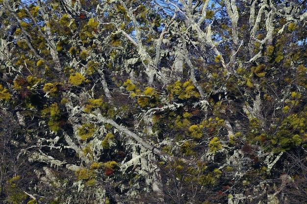 E a bela flora da patagônia durante o dia
