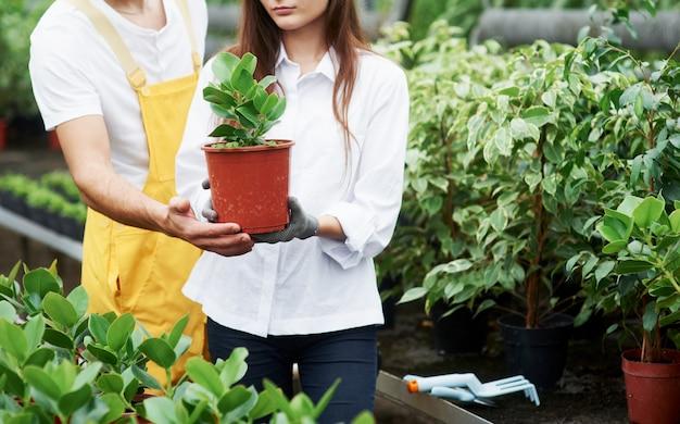 É importante dar atenção especial a cada flor se quiser bons resultados. dois adoráveis trabalhadores de jardim com roupas de trabalho, cuidando da planta no vaso na estufa.