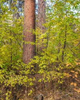 E lindas folhas nas árvores da floresta