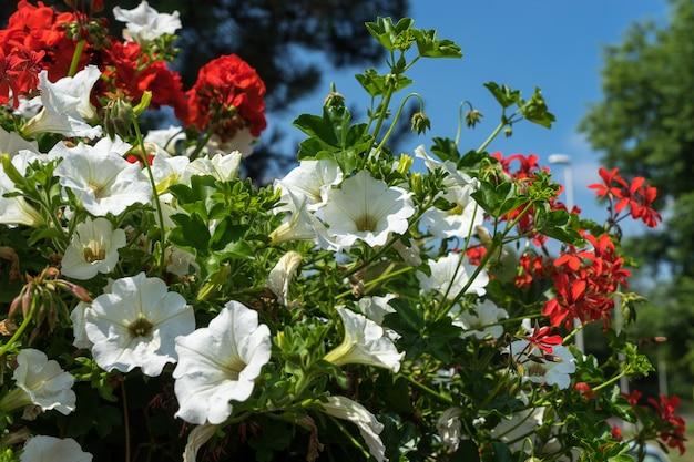 East grinstead em bloom