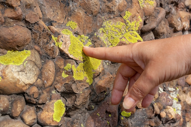 Eco conceito mulher toca uma parede de pedras cobertas com musgo verde com o dedo. imagem horizontal.