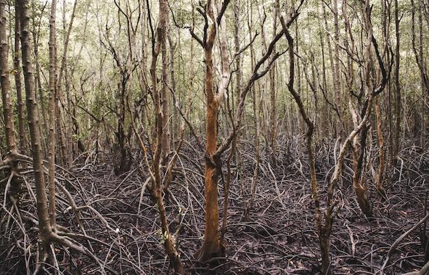 Ecologia da floresta de mangue.