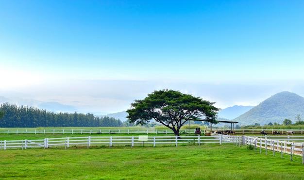 Ecologia e meio ambiente vaca leiteria fazenda prados árvores e montanhas.
