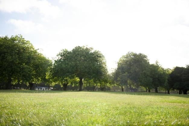 Ecologia natureza ir verde destino destino editado