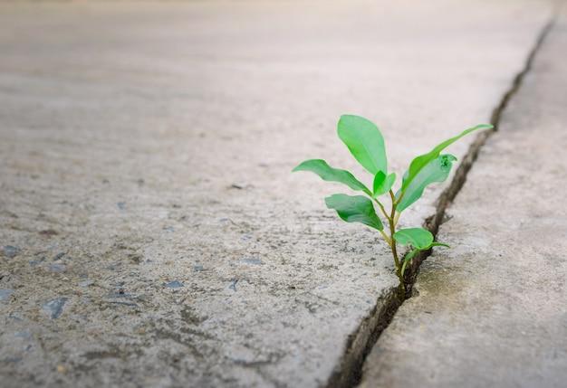 Ecologia planta árvore e ambiente seca crescendo na rua rachada