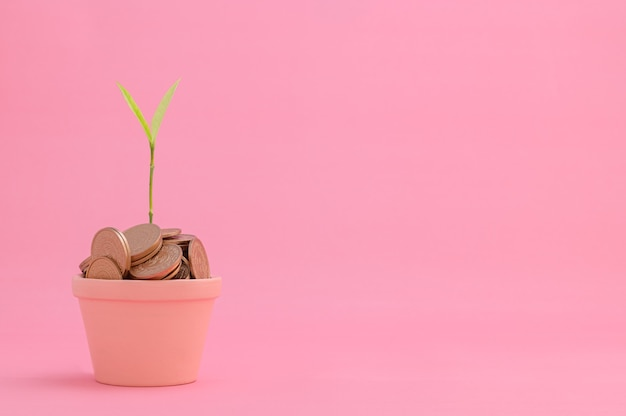 Economize dinheiro, invista em ações, cresça financeiramente.