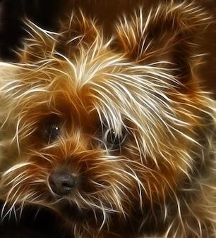 Edição de cão terrier nitidez editado animais