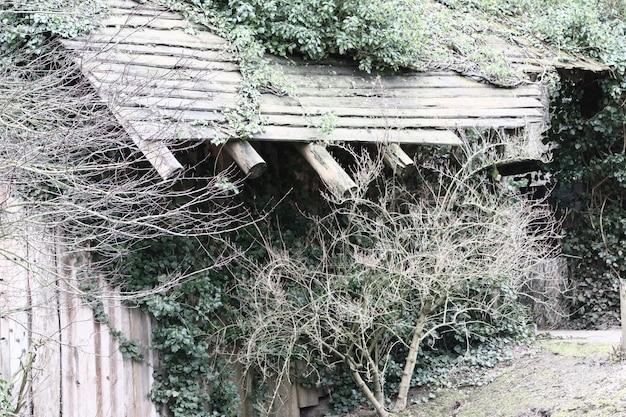 Edifício de madeira coberto de plantas