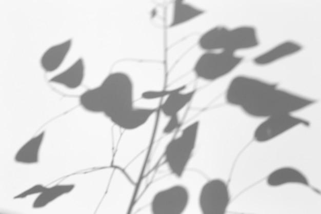 Efeito de sobreposição de sombra. sombras de folhas de árvores e galhos tropicais em uma parede branca à luz do sol.