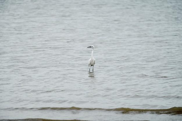 Egret ficar no mar